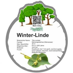 winter linde 46