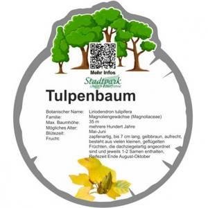 tulpenbaum 42