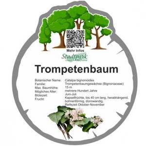 trompetenbaum 41