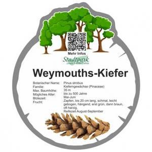 weymouths kiefer 45