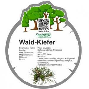 wald kiefer 44