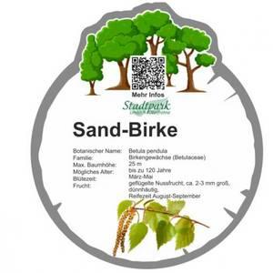 sand birke 28
