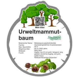 urweltmammutbaum 43